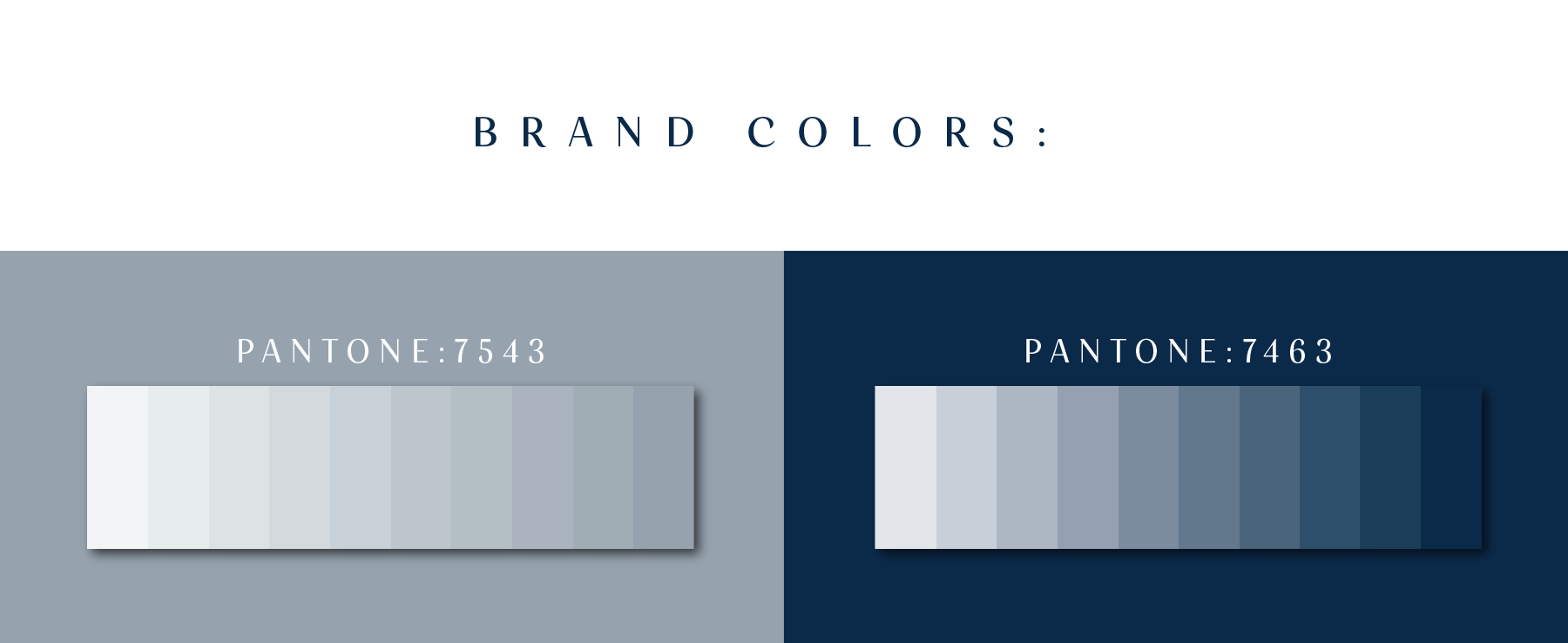 bortz-brand-colors